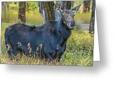 Proud Mama Moose Greeting Card