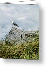 Proud Seagull Greeting Card