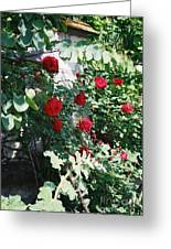 Provence Red Roses Greeting Card