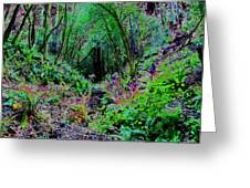Psychedelic Fern Gully On Mt Tamalpais Greeting Card