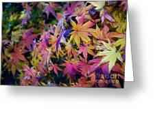 Psychedelic Maple Greeting Card by Kaye Menner