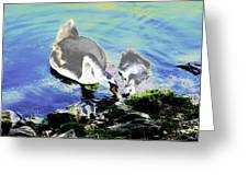 Psychedelic Mute Swan And Cygnet Feeding Greeting Card