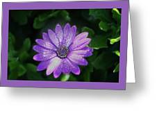 Psychedelic Purple Petals  Greeting Card
