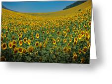 Psychodelic Sunflowers Greeting Card