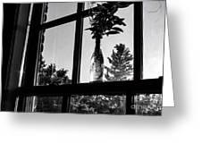 Pt 2 Flowers On A Windowsill Greeting Card