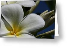 Pua Lena Pua Lei Aloha Tropical Plumeria Maui Hawaii Greeting Card