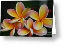 Pua Melia Plumeria Kuulei Haiku Greeting Card