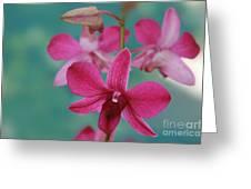 Puanani Kealoha Dendrobium D Burana Red Flame Hawaiian Orchid Greeting Card