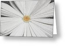 Puckered Daisy Greeting Card