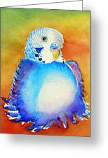 Pudgy Budgie Greeting Card