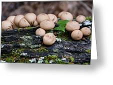 Puffball Gathering Greeting Card