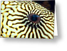 Pufferfish Greeting Card