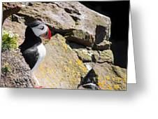 Puffin And Rocks Greeting Card