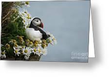 Puffin On Latrabjarg Cliff Greeting Card