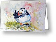Puffin On Stone Greeting Card