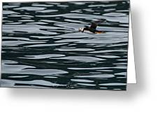 Puffin With Dinner Greeting Card