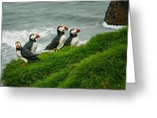 Puffins Returning From Fishing Greeting Card