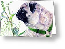 Pug And Nature Greeting Card