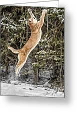 Puma High Jump Greeting Card