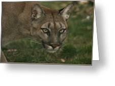 Puma  Greeting Card