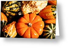 Pumkin And Gourds Greeting Card