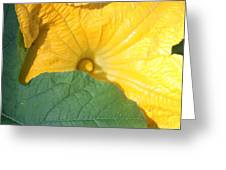 Pumpkin Flower Greeting Card