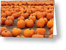 Pumpkins Waiting For Homes Greeting Card