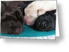 Puppies Dreams 2 Greeting Card