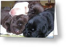 Puppies Mountain Greeting Card