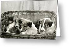 Puppies Of The Past Greeting Card