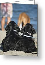Puppies On The Beach Greeting Card