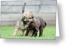 Puppies Playing Greeting Card