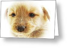 Puppy Art Greeting Card