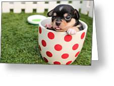 Puppy Cup Greeting Card