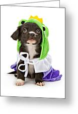 Puppy Frog Prince Greeting Card by Susan  Schmitz