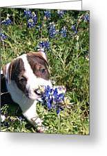 Puppy In The Blubonnets Greeting Card