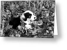 Puppy In The Leaves Greeting Card
