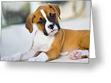 Puppy Greeting Card by Juan  Silva