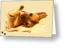 Puppy Love Greeting Card by Amanda Vouglas