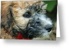 Puppy Love I Greeting Card