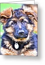 Puppy Oskar 2 Greeting Card