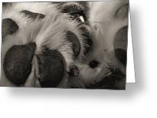 Puppy Paws Greeting Card
