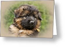 Puppy Portrait II Greeting Card by Sandy Keeton