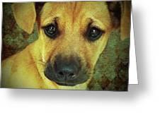 Puppy Portrait Greeting Card