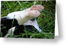 Puppy Prayers Greeting Card