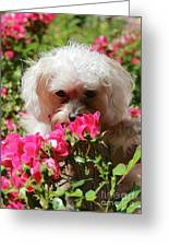 Puppy With Roses Greeting Card