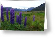 Pure And Simple Nature Of New Zealand Greeting Card