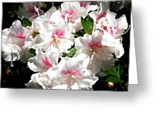 Pure Beauty Greeting Card