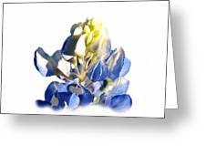 Pure Blue Bonnet Greeting Card