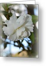Pure Camelia Greeting Card